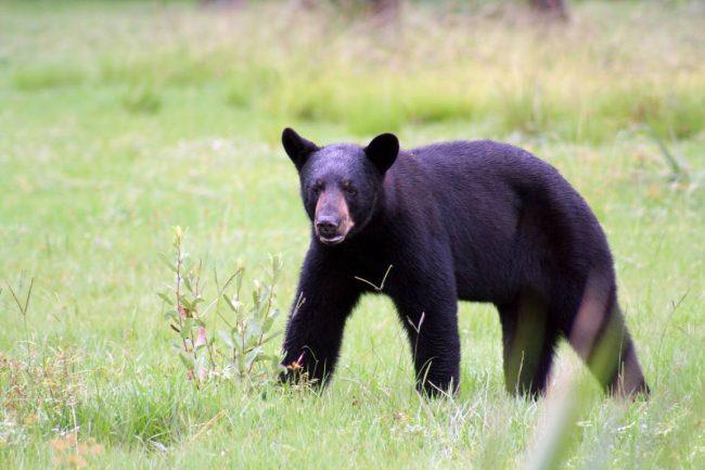 """Cinco osos de """"varios tamaños"""" atacan a una mujer de Florida en su garaje"""