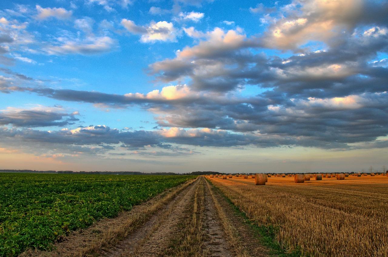 AGRICULTORES, PREPÁRENSE PARA UNA VIDA SIN TLCAN